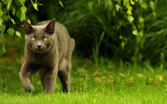 кошка, природа