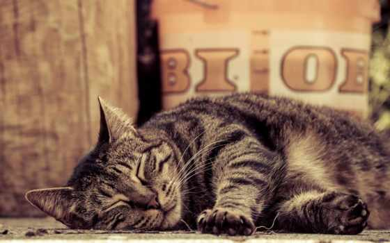 кот, sleeping, desktop, paws, tabby, lies, free, cats,