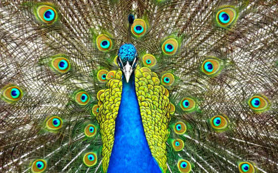 animals, birds, desktop, resolutions, photos, widescreen, free,
