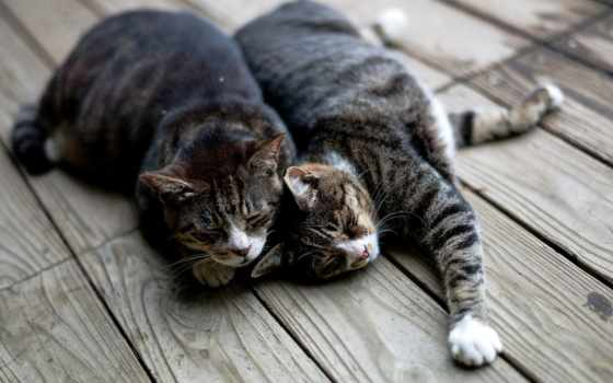 кошки, две, кошек, двух, базовым, better, ветер,