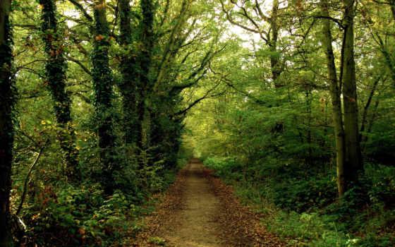 лес, дорога, тропинка, woods, лесу, природа,