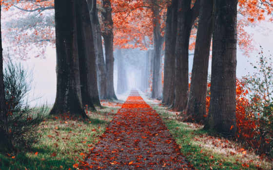 осень, permission, аллея, деревья