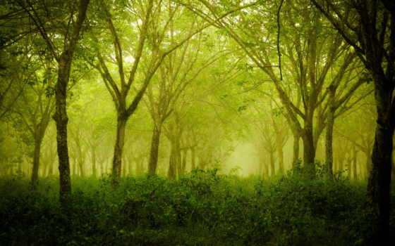 лес, деревья Фон № 24972 разрешение 2560x1600