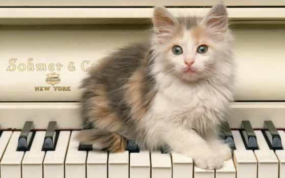 милый котенок на рояли