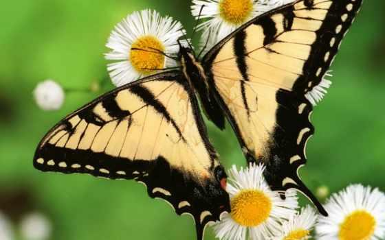 картинку, загрузить, правка, наверх, рыба, красивые, самые, насекомое, цветок, бабочка,