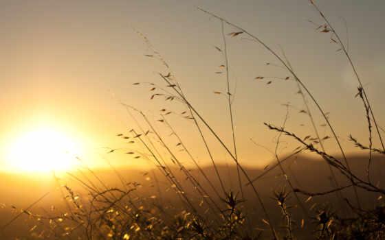 рассвет, трава, sun