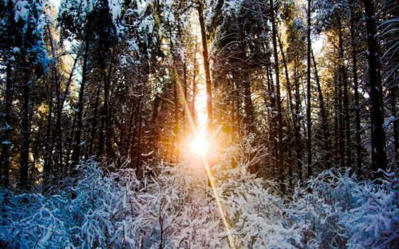 sunlight, trees, сквозь, дерево, листья,
