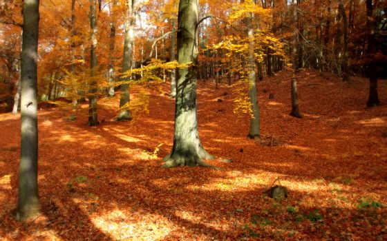 осенние, осень, природа