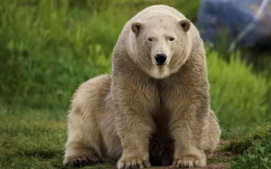 медведь, photos