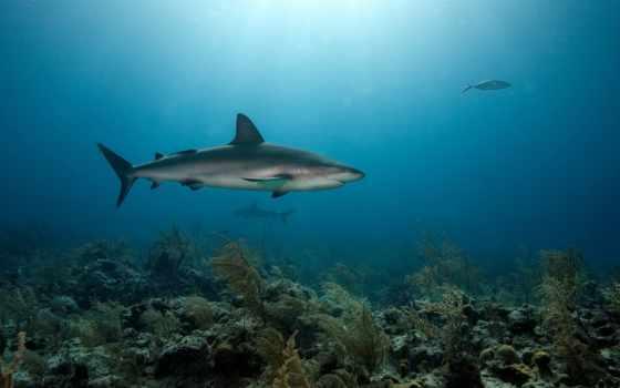 bottom, море, кораллы, хищники, акулы,
