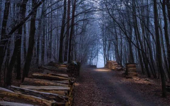 дорога, об, туман, осень, atmospheric, информация, поленья, бесплатные, последний, technology, лес,