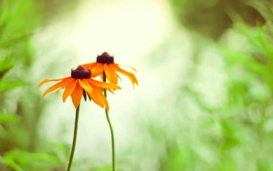 cvety, оранжевые, август, календарем, summer, красивые, трава, желтые, календарь,
