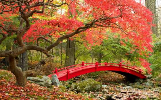 park, garden, мост, пасть, fp, фотообои, japanese, японском, парке,