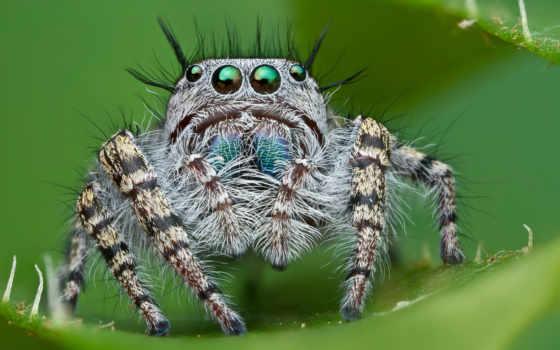 пауки, скакуны, насекомые
