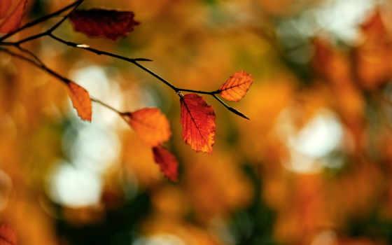 осень, branch, макро, листва, devushki, губы, блики, осенняя, расширение, природа,