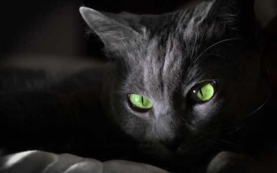 кот, white, black, красивый, глаз, animal, черная, хороший, фото