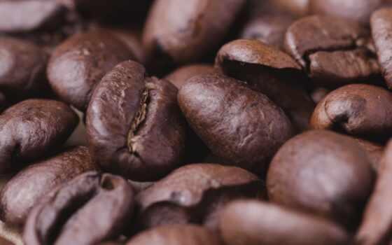 coffee, bean, браун, растение, white, chocolate, во, еда, дневной