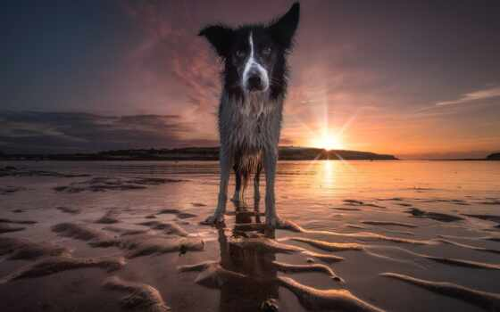 собака, пляж, тематика, water, хаска, закат, море, небо, смотреть, глаза