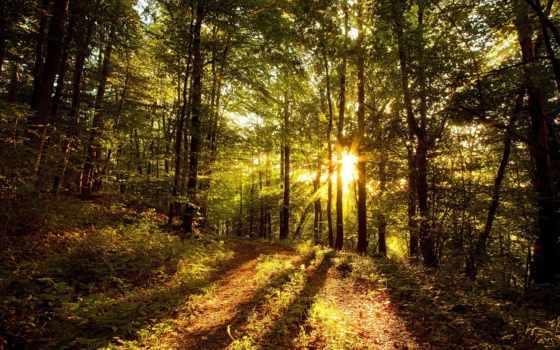 лес, солнце