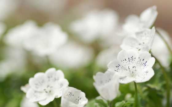 весна, цветы, весенние Фон № 34863 разрешение 1600x1200