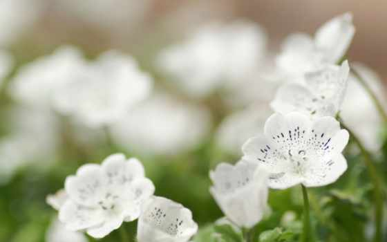 весна, цветы, весенние