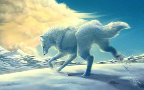 волк, white, снег