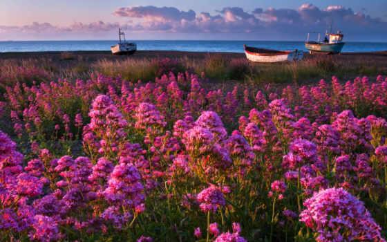 море, цветы, небо, лодки, природа, марта, весна, трава, берег,