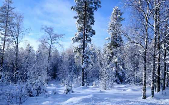 les, зимний, zima