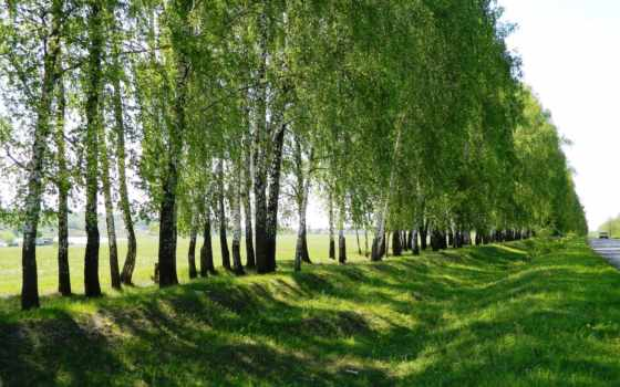 roads, трава
