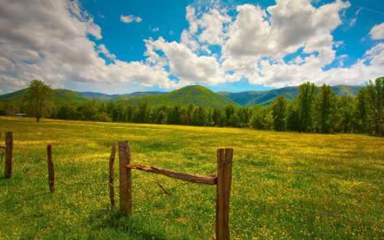 fondos, pantalla, paisaje, verano, paisajes, campos, flores, campo, rboles, amarillas,