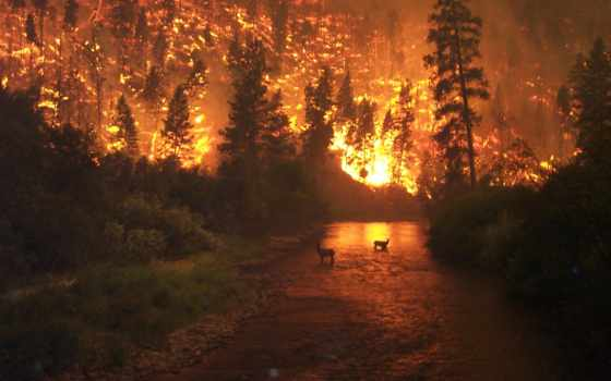 горит, land, под, поста, гектаров, взгляд, горят, за, ногами, огонь, тысячи,