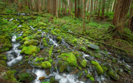 national, park, мох, trees, камни, ручей, олимпийский, thingvellir, природа, лес,