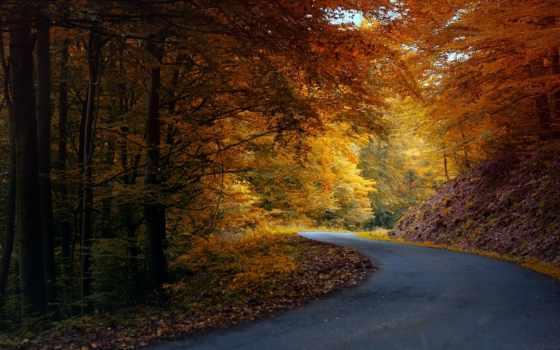 природа, осень Фон № 33606 разрешение 1680x1050
