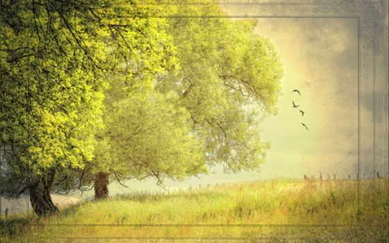 природа, summer, деревья