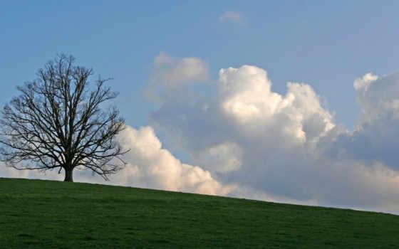 дерево, за, стоящее