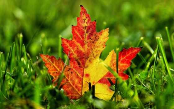 осень, широкоформатные, природа, осенние, красивые,