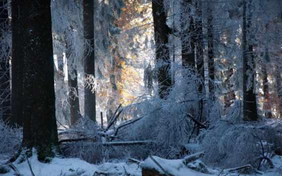 лес, winter, trees, иней, stock, снег, deviantart, kuschelirmel, медитация,