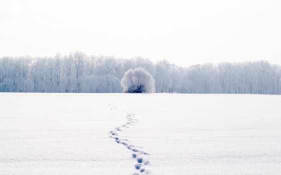 traces, снег, снегу, winter, лес, поле,
