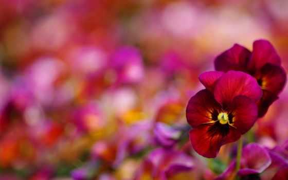 sunday, утро, quotes, хороший, happy, greetings, wishes, день, images,
