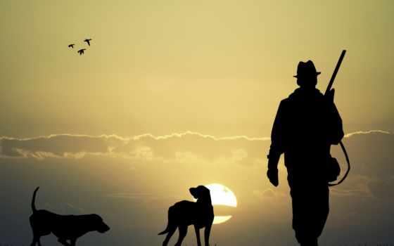hunter, собаки, plain, fone, солнца, hunting, собаками, утки, винтовка, две,