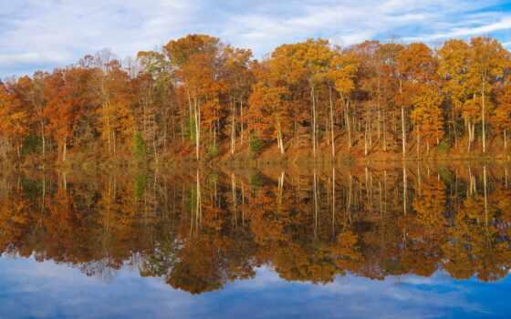 дерево, растение, осень, озеро