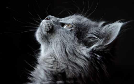 gato, olhando, cima, stokovyi, векторный, kot, youtube, эль, витебск, tysyacha, socset
