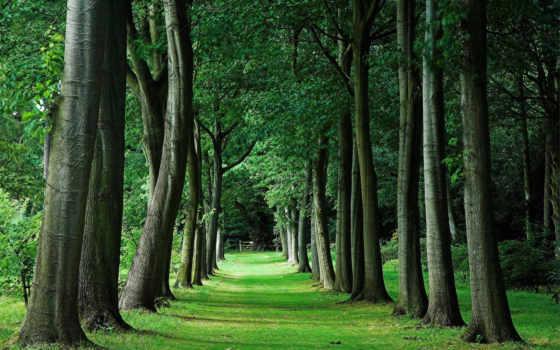 дубы, зелень, лес, деревья,
