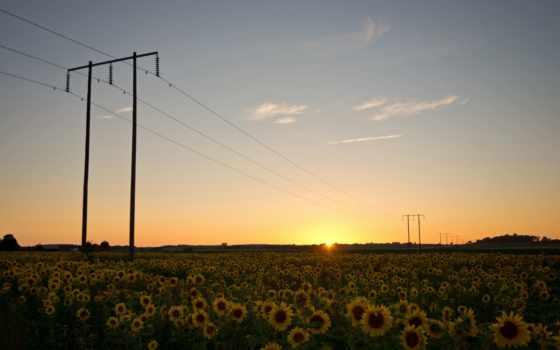 поле, опоры, провода, подсолнухи, природа, швеция,
