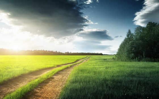 priroda, pole, деревя, les, дорога, трава, фона,