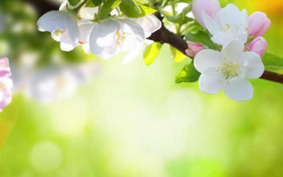 цветы, природа, дерева