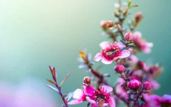 цветы, flowers, подробнее