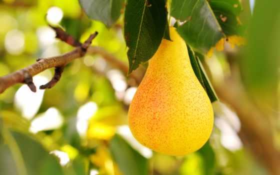 груша, еда, груши, виноград, яблоки, картинка, фрукты, плод, ням, витамины,