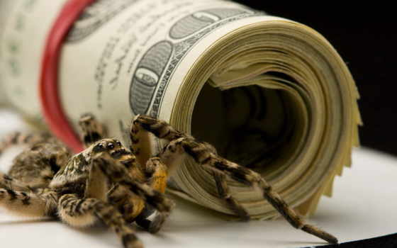 dollars, паук, dollar, money, free, desktop, stock,