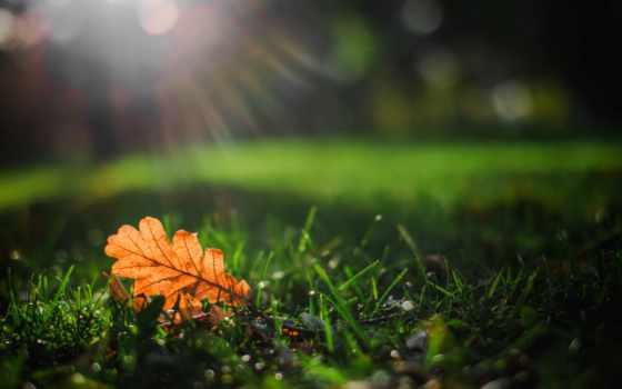 трава, picson, природа, german, trees, листва, ultra, листочек, макро,